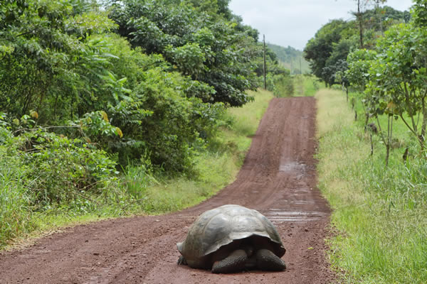 turtle crossing road